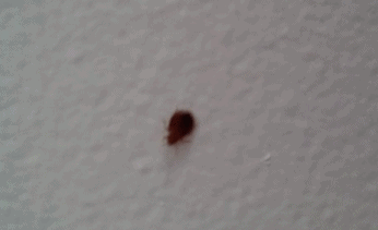 What Are These Tiny Bugs On Wall That Keep Appearing Nonstop